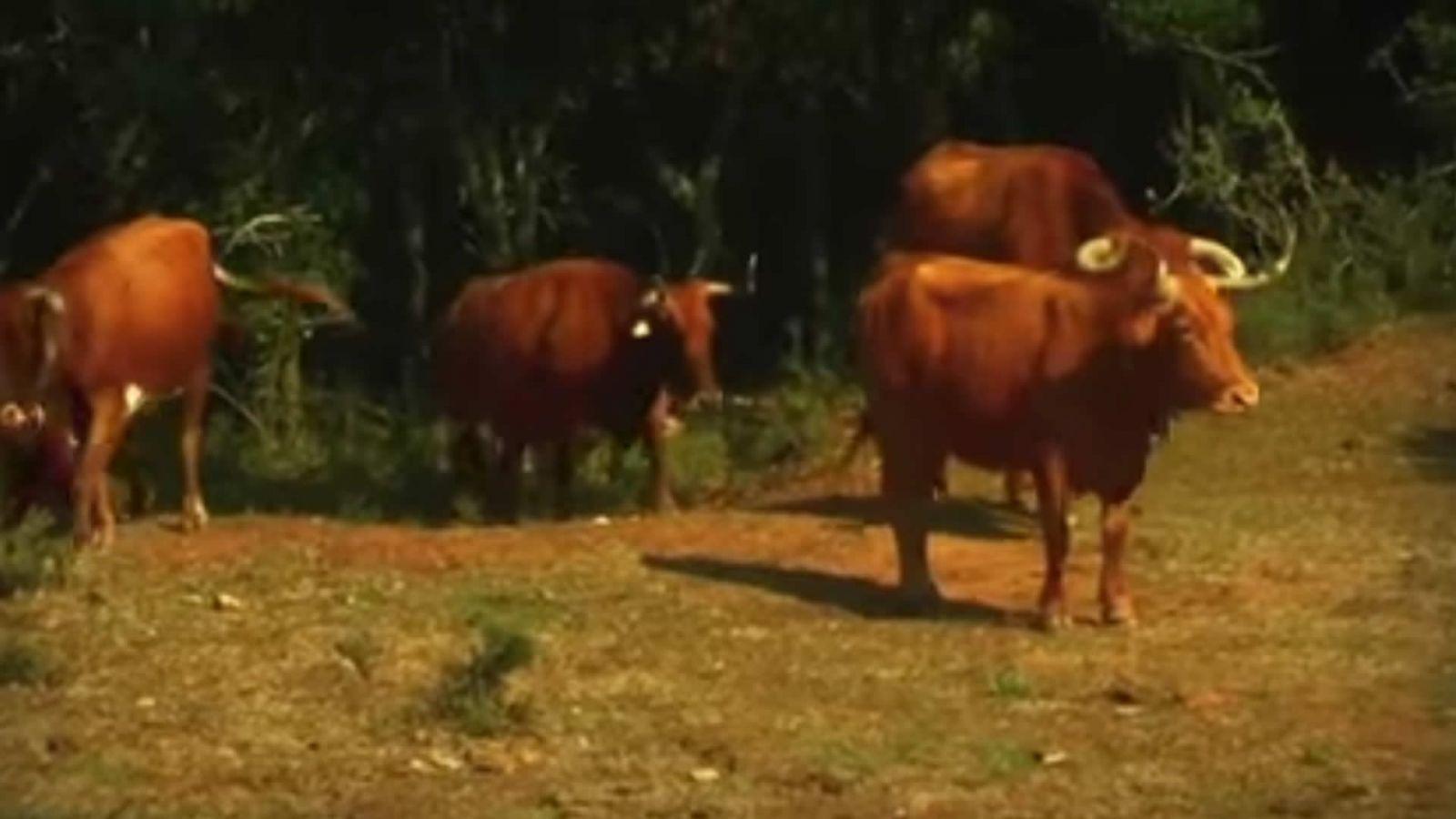 Video Visita Alba Reta Turismo Rural Navarra