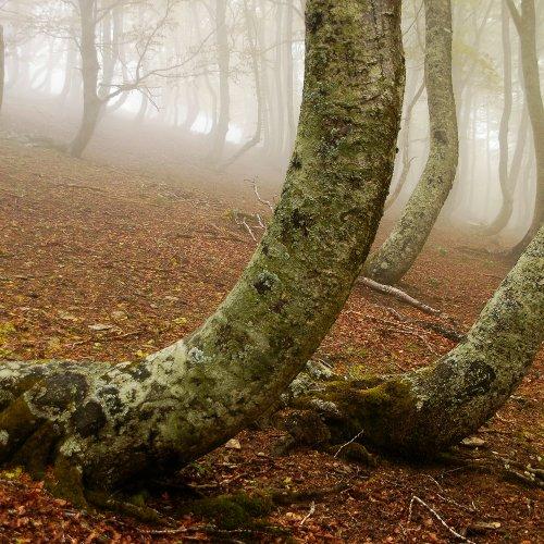 Hayedo Urbasa Andia Niebla