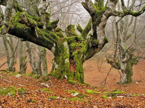 El Bosque Mágico. Cañón del río Iranzu