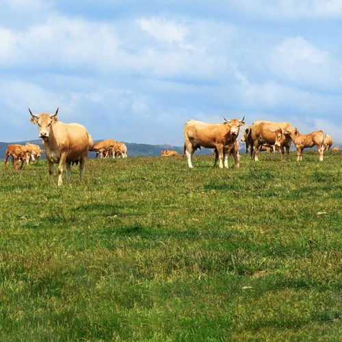 Turismo Rural En Navarra Finca Ganaderia Ecologica Sarbil