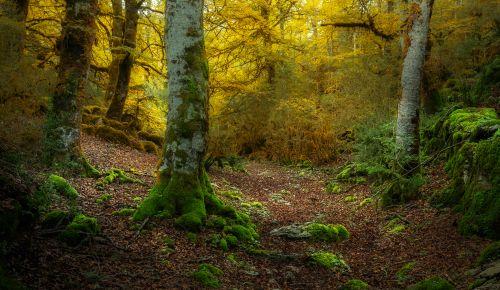 Urbasa-Andia natural park